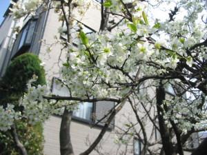 家の前に咲く花