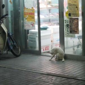 魚屋さんの軒先にずっとたたずむ猫ちゃん一匹