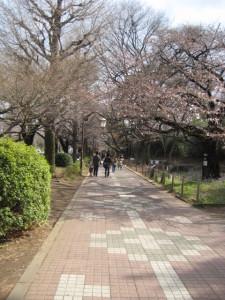 国立駅前、散歩