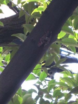 夏を謳歌する蝉