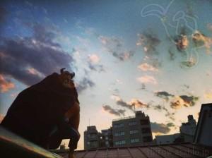 夕空と野獣(美女と野獣)